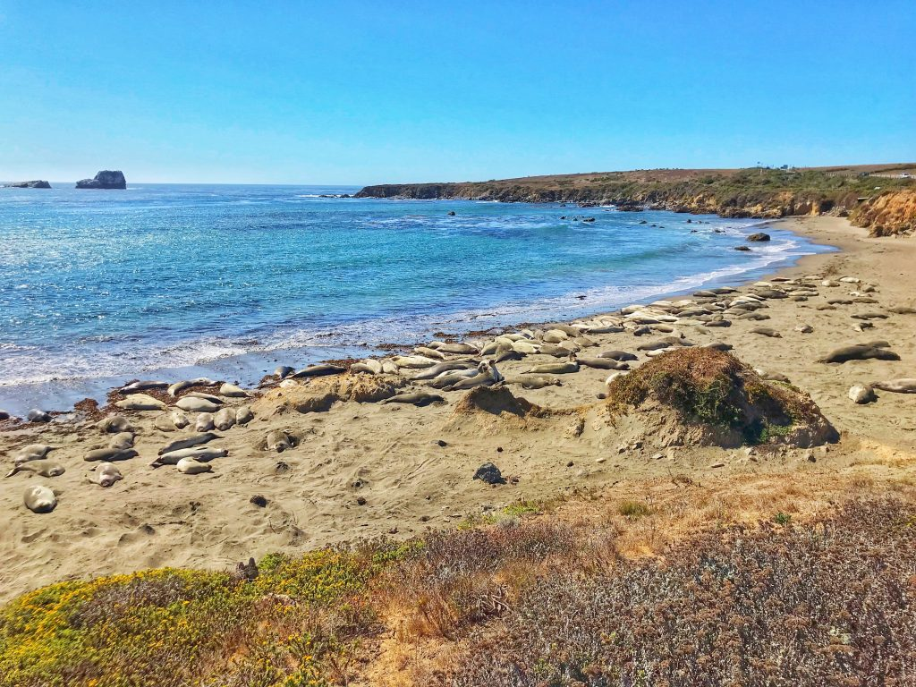 Big Sur - Elephant Seal Vista Point