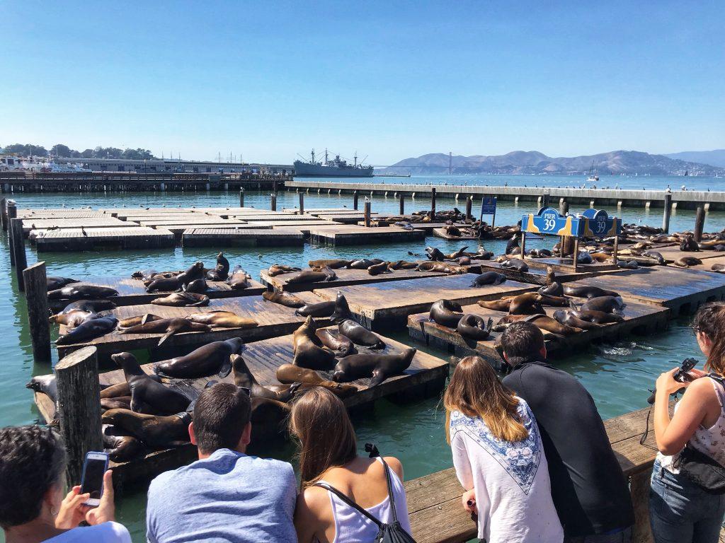 Pier 39 lwy morskie - Zwiedzanie Safrancisco