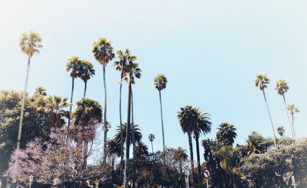 palmy napier