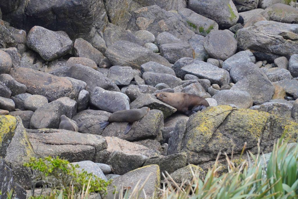 Seal Colony w Tauranga Bay