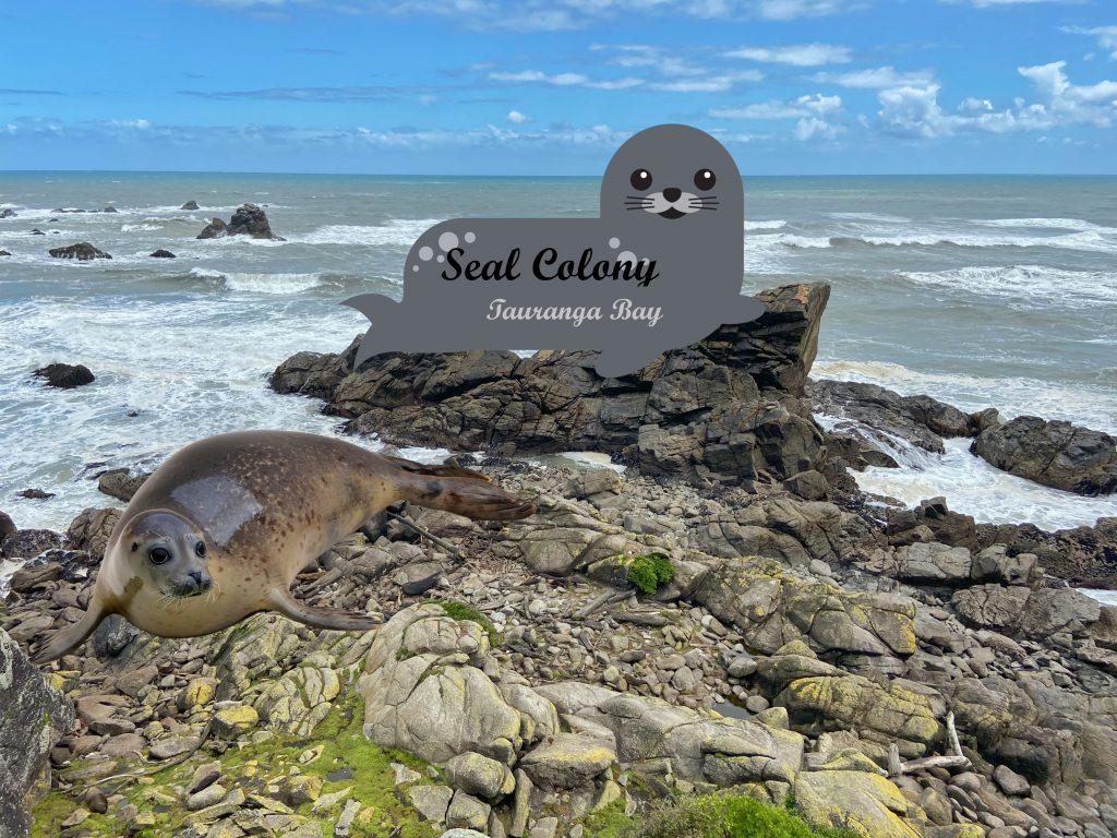 Seal Colony w Tauranga Bay West Coast